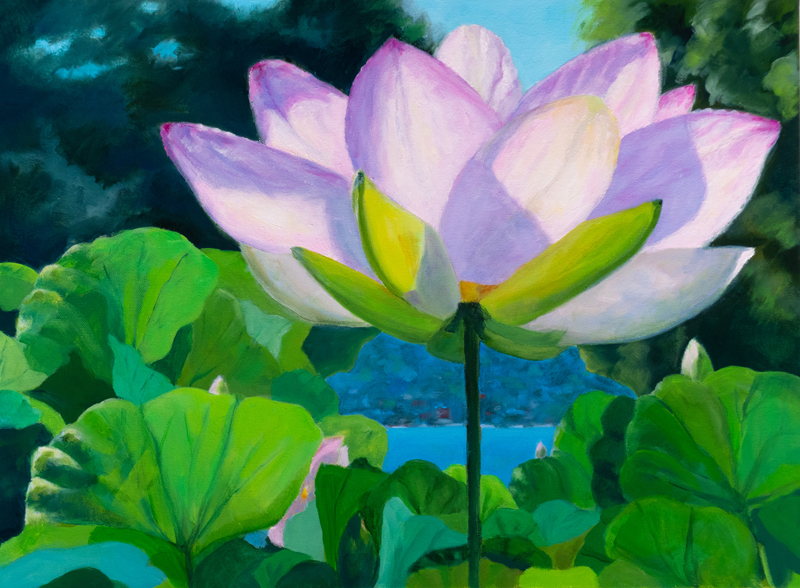 Water Lily (18 x 24)